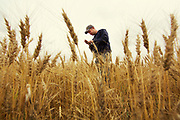 Jay Schultz near Standard, Alberta, August 23, 2014.  Photograph by Todd Korol for The Globe and Mail