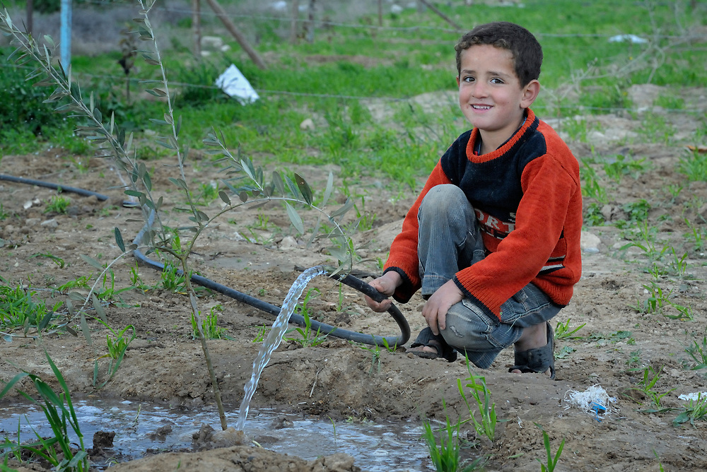 Mohamed Al-Shawish, a 5-year old Palestinian boy, waters trees on a farm in Johor Al-Deek, a section of the Bureij refugee camp in Gaza. The water comes from a well and water pump provided by Dan Church Aid--a member of the ACT Alliance--to replace a well and pump destroyed by the Israeli military. Water resources in the Gaza Strip are critically insufficient. Almost two-thirds of Gaza's water is used for agriculture, but farmers are often forced to use salty and polluted water from shallow unlicensed wells..