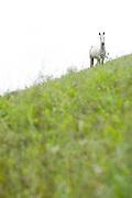 Santos Dumont_MG, Brasil...Cavalo em um pasto...The horse in the pasture...Foto: LEO DRUMOND / NITRO