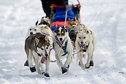 Start of the Race to the Sky sled dog race, near Rimini, Montana.