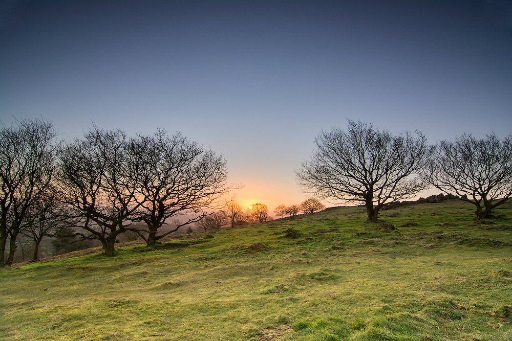 The sun rising through the trees at Beacon Hill, Leicestershire.