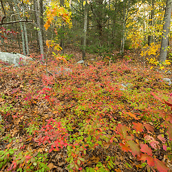 Fall in the forest at the Adams Point Wildlife Management Area in Durham, New Hampshire.