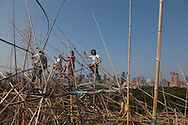New York. elevated view . Doug and Mike Starn on the Roof: Big Bambú, bambou sculpture exhibitit on the roof of the metropolitan museum  New York - United States / big bambu exposition de Doug and Mike Starn sur le toit du metropolitan museum  New York  Etats unis