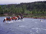 """Amanda Cornell riding """"Shorty"""" with her dog """"Tisha"""" leading horses """"Dick"""" and """"Scout"""" across ford of Caribou Creek, Talkeetna Mountains, Alaska."""