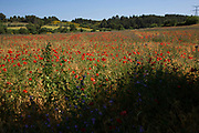 Field of wild poppies in Tournissan, Languedoc-Roussillon, France. Red poppy flower fields such as this hold a symbolism of remembrance of soldiers who have died during wartime.