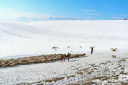 A shepherd is seen along the Lachin corridor on Tuesday, Dec 22, 2020. The corridor is a mountain pass connecting Armenia and the enclave of Nagorno-Karabakh. The corridor is de jure in the Lachin District of Azerbaijan, but de facto in the Kashatagh Province of the self-proclaimed Republic of Artsakh. It contains the town of Lachin and the villages of Zabux and Sus. (Photo/ Vudi Xhymshiti)