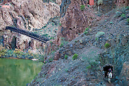 A mule string exiting the tunnel on the South side of the Black Bridge which crosses the Colorado river in Grand Canyon.