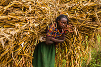 Konso tribe woman carrying maize stocks, Southern Nations Nationalities and People's Region, Ethiopia.