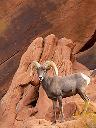 United States, Nevada, Valley of Fire State Park