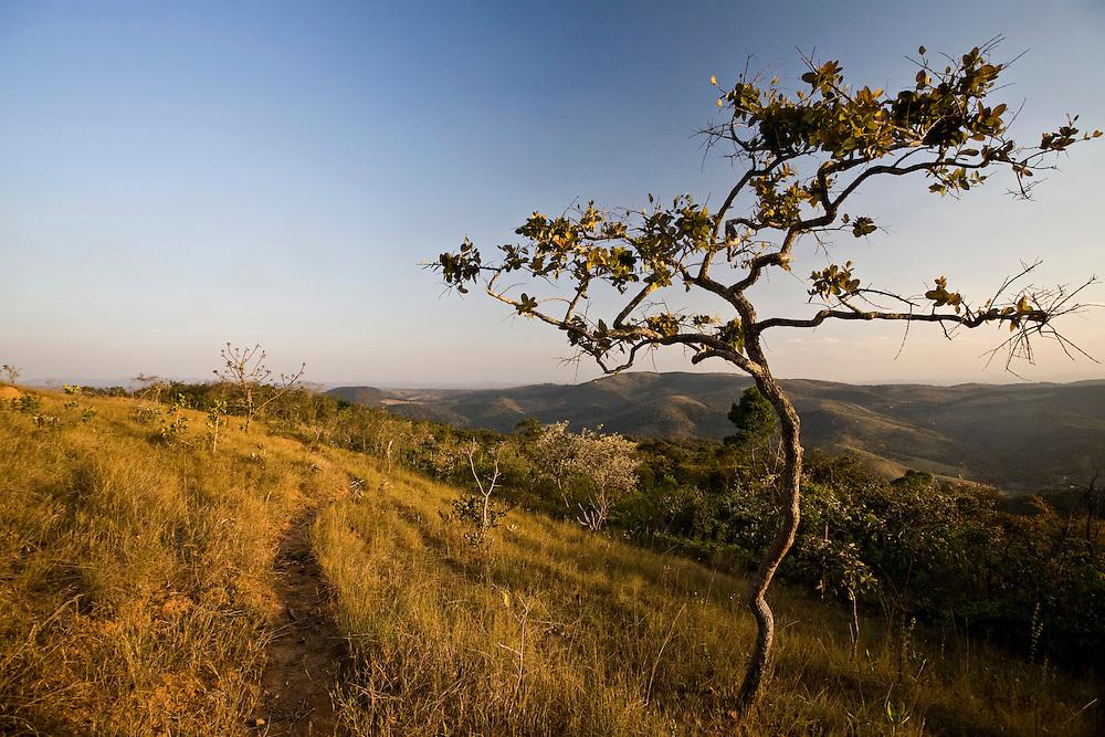 Itabirito_MG, Brasil...Paisagem de cerrado em Itabirito, Minas Gerais...The landscape with tropical savanna ecoregion in Itabirito, Minas Gerais...Foto: JOAO MARCOS ROSA / NITRO