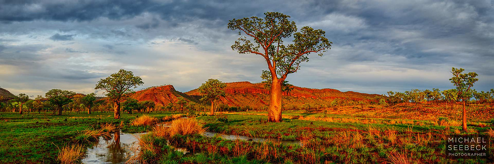 Early morning sunlight on boab trees and a seasonal stream, after a severe storm overnight which lasted several hours, well into the early hours of the morning.<br /> <br /> Code: HAWK0018<br /> <br /> Limited Edition of 125 Prints