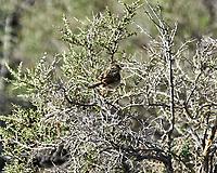 LBJ. Alamosa National Wildlife Refuge, Colorado. Image taken with a Nikon D300  camera and 80-400 mm VR lens