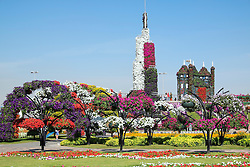 View of flower displays and landscaping  at  Miracle Garden the world's biggest flower garden in Dubai United Arab Emirates
