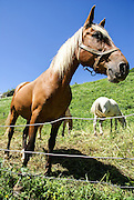 Close up of a horse. Photographed in the Pyrenees Mountains, Spain