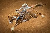 2019 Rodeo Austin Highlights