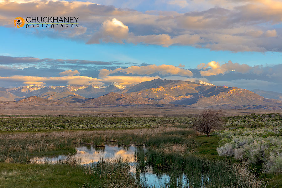 Snake Mountains reflect into wetlands of Great Basin National Park, Nevada, USA