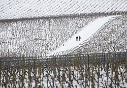 © Licensed to London News Pictures. 18/03/2018. Dorking, UK. Dog walkers brave the weather at Denbies Vineyard after overnight snow and freezing temperatures. Amber weather warnings remain in place for parts of the UK for a second day. Photo credit: Peter Macdiarmid/LNP