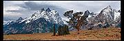 Storm clouds rolling in over the Grand and the Old Patriarch Tree in Grand Teton National Park.