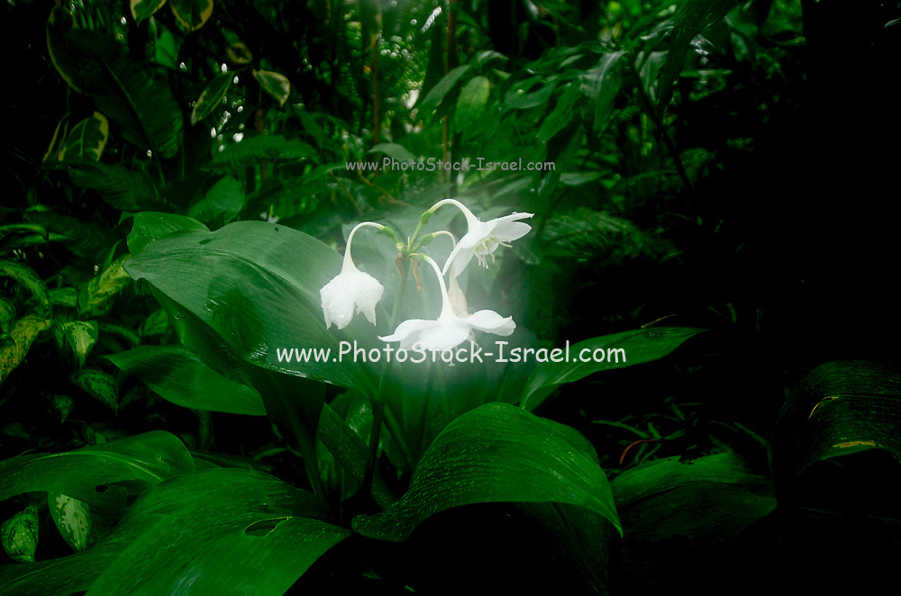 Glowing white flowers on a shrub in a garden