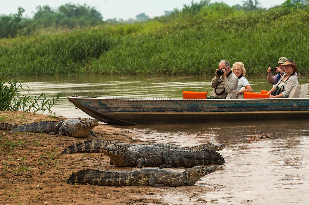 Tourists viewing animals in Pantanal<br /> Pantanal. Largest contiguous wetland system in the world. Mato Grosso do Sul Province. BRAZIL.  South America