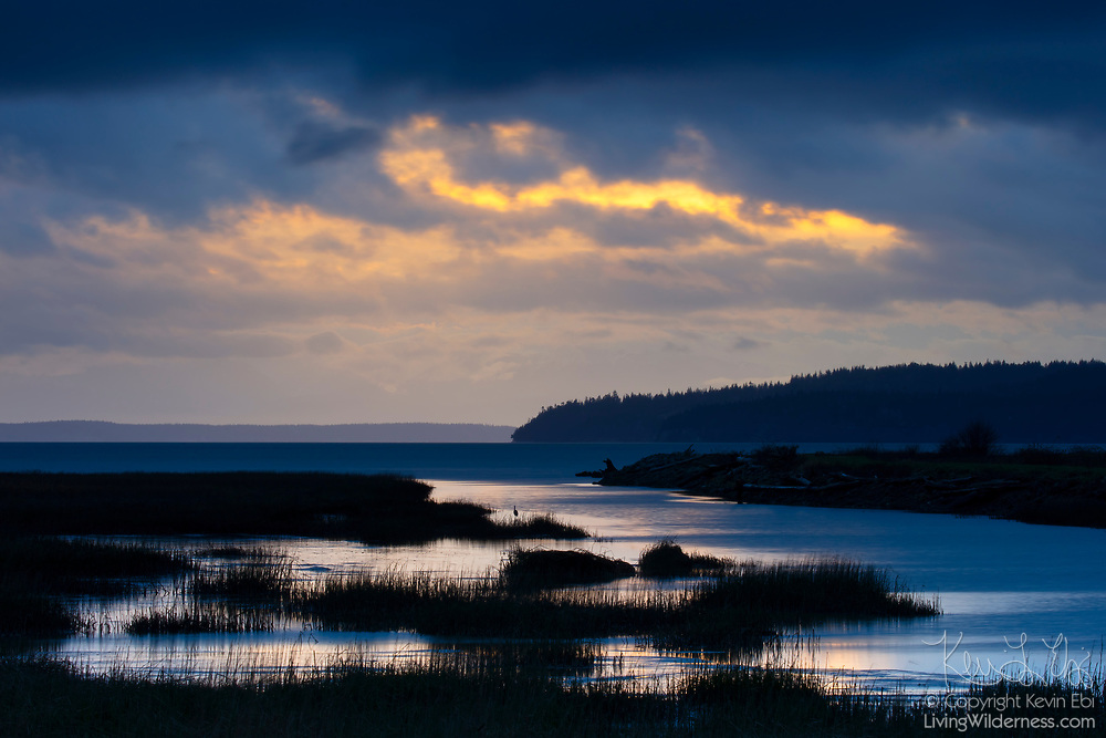 A narrow band of golden sunset color shines through a break in storm clouds over a saltwater marsh on Fir Island in Skagit County, Washington. A great blue heron is visible hunting among the marsh grasses.