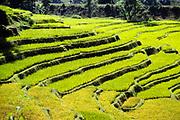 Terraced rice paddy fields in Sri Lanka, Asia in 1980