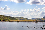 Horse riding in Southern Iceland. Riding through the farmlands of Hrunamannahreppur. Crossing the Stora-Laxa river.