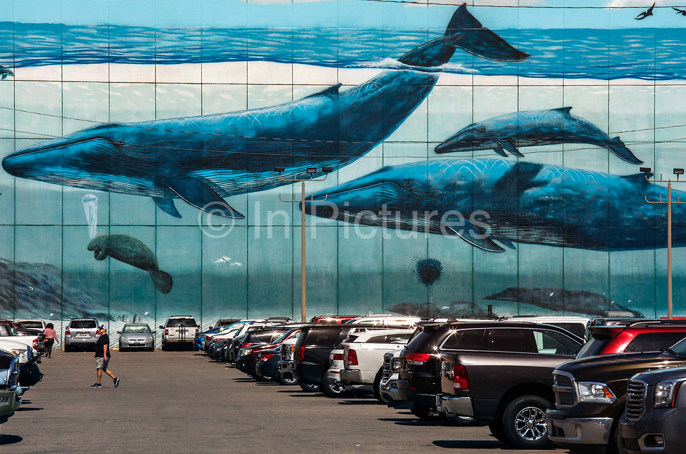 Blue whales painted By Robert Wyland on the side of the riverside Hilton Hotel advertising the adjacent aquarium on 25th February 2020 in New Orleans, Louisiana, United States. Located on the Mississippi River adjacent to the French Quarter, Audubon Aquarium of the Americas is consistently top ranked, voted as one of the top five in the country in the USA. The Aquarium transports visitors to an underwater world from the Caribbean, to the Amazon Rainforest, to the waters that give New Orleans its lifeblood: the Mississippi River and the Gulf of Mexico. With more than 3,600 animals from more than 250 species, including endangered species, such as African penguins, and rare animals, such as white alligators.