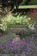 Stone urn with Scaevola 'White Wonder' - Fairy Fanflower, Erysimum 'Bowles Mauve'  - September