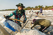 """28 MARCH 2014 - NA KHOK, SAMUT SAKHON, THAILAND: A salt worker collects salt in an evaporation pond in Samut Sakhon province. Thai salt farmers south of Bangkok are experiencing a better than usual year this year because of the drought gripping Thailand. Some salt farmers say they could get an extra month of salt collection out of their fields because it has rained so little through the current dry season. Salt is normally collected from late February through May. Fields are flooded with sea water and salt is collected as the water evaporates. Last year, the salt season was shortened by more than a month because of unseasonable rains. The Thai government has warned farmers and consumers that 2014 may be a record dry year because an expected """"El Nino"""" weather pattern will block rain in mainland Southeast Asia. Salt has traditionally been harvested in tidal basins along the coast southwest of Bangkok but industrial development in the area has reduced the amount of land available for commercial salt production and now salt is mainly harvested in a small parts of Samut Songkhram and Samut Sakhon provinces.    PHOTO BY JACK KURTZ"""