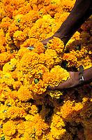 Inde - Rajasthan - Coeuillette des fleurs destiné aux offrandes // India, Rajsthan, Flower for offering