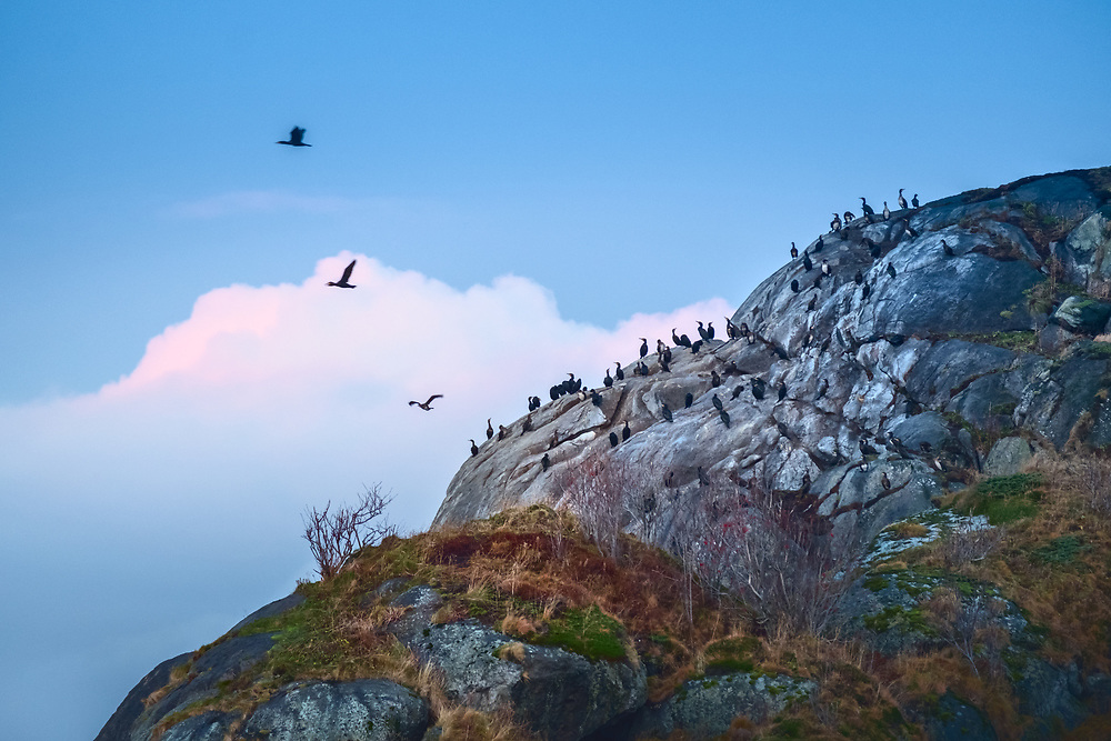 Of the world's about 9,000 bird species, around 300 have their natural habitat in Norway, and an additional number of around 200 rarer bird types are found at certain places and times of theyear.