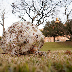 Austin, TX USA January 11, 2021:  A rare snowball slowly melts on the west lawn at the Texas Capitol the day after a freak snowstorm hits just prior to the 87th Legislature session of 2021. The two-foot thick snowball was probably made by a tourist reveling in a rare Austin snow event.