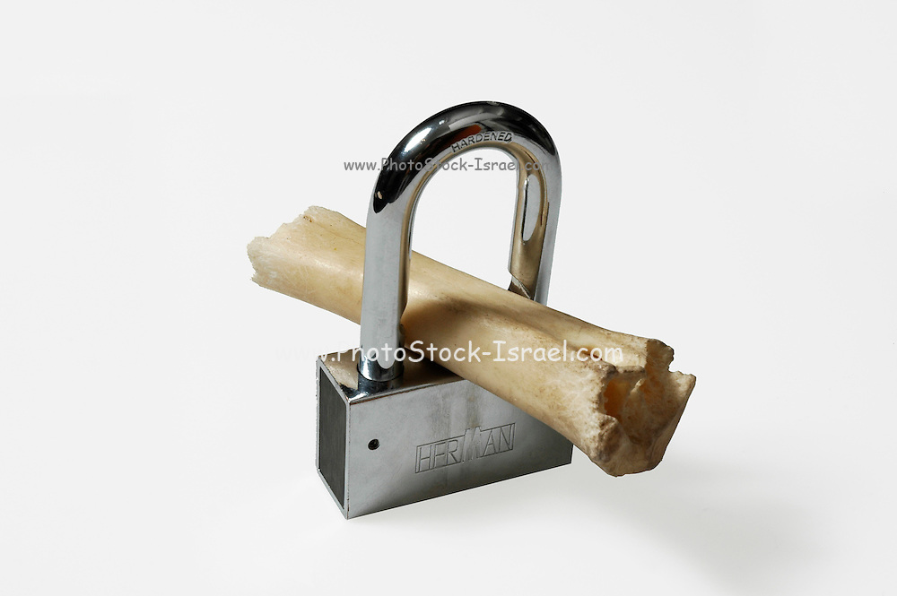 Lock and bone a concept shot for osteoporosis cure preventing the loss of bony tissue white background