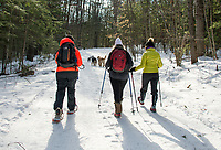 Carolyn Larocque, Lisa Keller and Jan Jeffrey meet at Ahern State Park to walk with their dogs Jake, Bode, Trapper and Sebastian on Saturday morning.  (Karen Bobotas/for the Laconia Daily Sun)