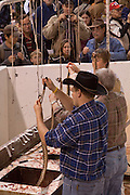SWEETWATER, TX - MARCH 14: Jaycees volunteer snake handlers process western diamondback rattlesnakes brought in by hunters during the 51st Annual Sweetwater Texas Rattlesnake Round-Up, March 14, 2009 in Sweetwater, Texas. Approximately 24,000 pounds of rattlesnakes will be collected, milked for venom and the meat served to support charity. (Photo by Richard Ellis)
