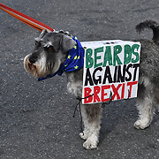 Hundreds barking mad stop Brexit doggy style! 'pawlitical' march with Hundreds of dogs through central London to Parliament - to send Brexit to the doghouse!, London, UK. 7 October 2018.