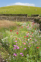 arable weeds grown in a country garden