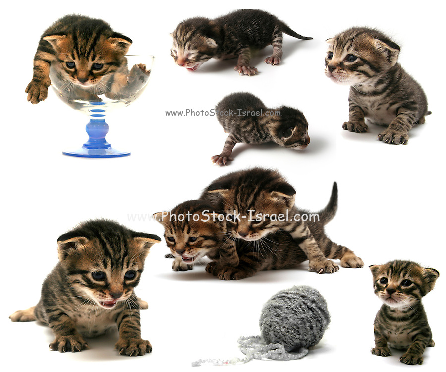 Collage of 7 images of a curious one week old kitten in various poses of enquiry