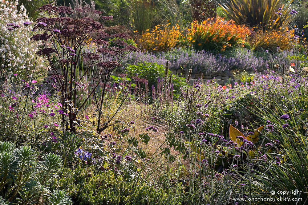 Early autumn border with Angelica sylvestris 'Purpurea' in the foreground