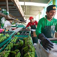 Portraits of Julio Suárez packing organic Fairtrade bananas in one of several processing plants at Fairtrade-certified banana producers APPBOSA in Samán, Marcavelica, Piura, Peru.