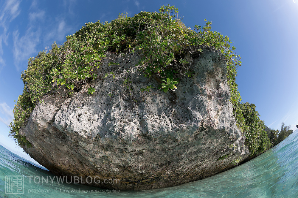 One of Palau's many picturesque Rock Islands, surrounded by blue skies and shallow tropical seas
