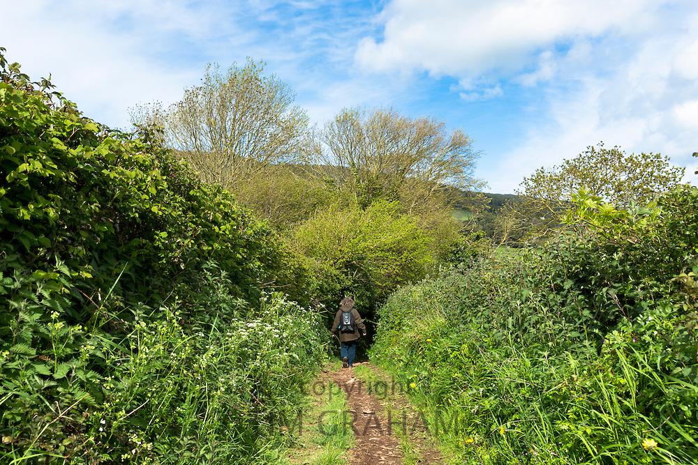 Lone walker strolls on Drover's Trail footpath in Exmoor National Park near Allerford, Somerset, UK