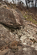 Timber Rattlesnakes (Crotalus horridus) - Black & Yellow morph<br /> MANIPULATED<br /> near hibernation den<br /> Northern Georgia<br /> USA<br /> HABITAT & RANGE: Deciduous forests in rugged terrain and open, rocky ledges. Eastern USA