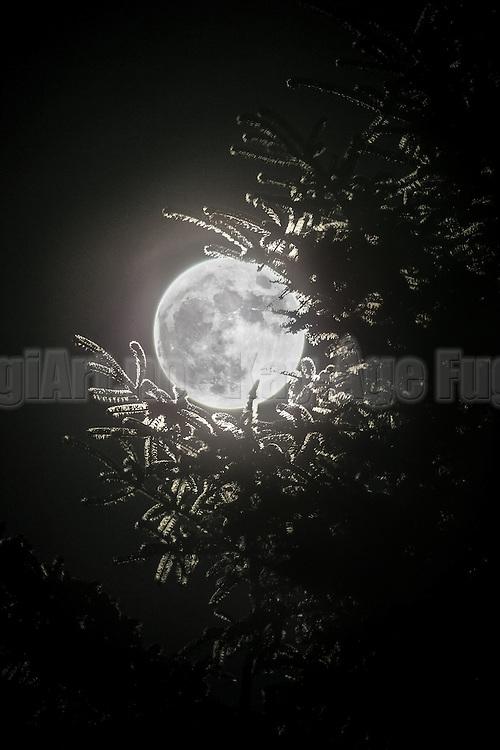 The Full Moon seen through a tree   Fullmånen sett gjennom et tred.