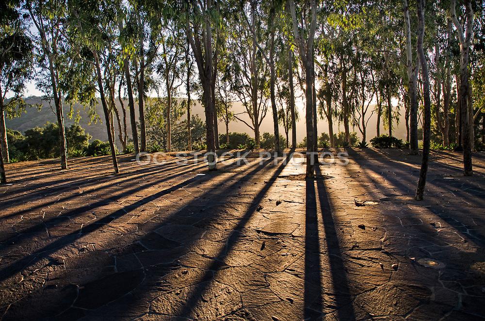 Scenic Soka University Aliso Viejo Campus