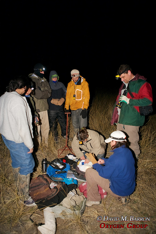 EW Team Preparing To Work On Captured Animal