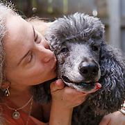 20201212 Amber Standard Poodle