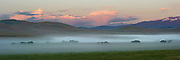 The morning mist clears off a field near the Madison river.