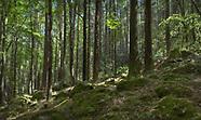 Wicklow Woodland